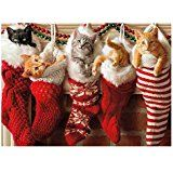 Amazon.com : A1254 PETIGREET CAT-MASS CARDS: Assorted Box Of 10 Hilarious Christmas Cards, W/12 Envelopes (10 Designs, 1 Card Per Design) : Office Products