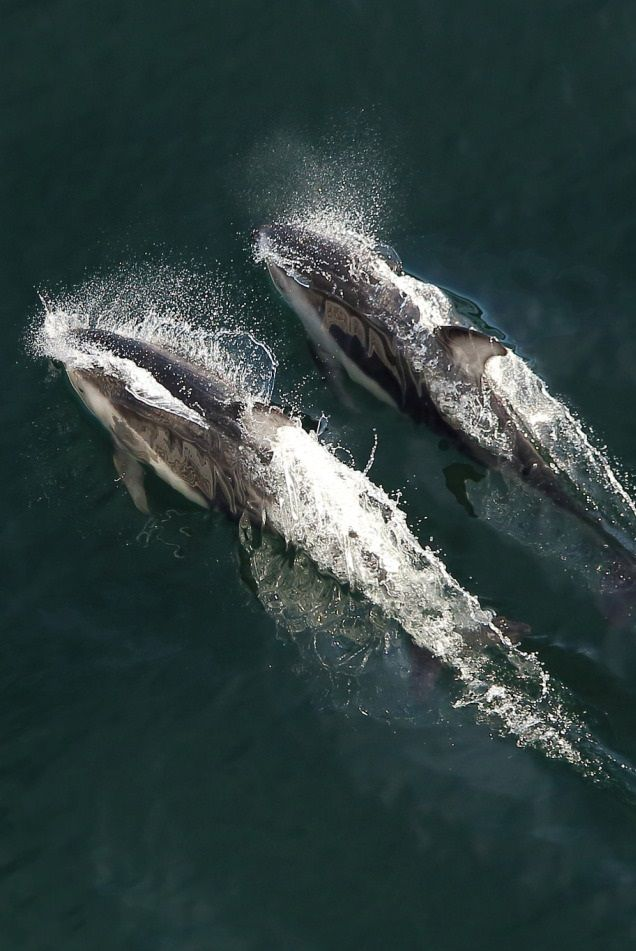 Best Whale Of A Tail Images On Pinterest Humpback Whale - Rare moment 40 ton whale jumps completely out of the water