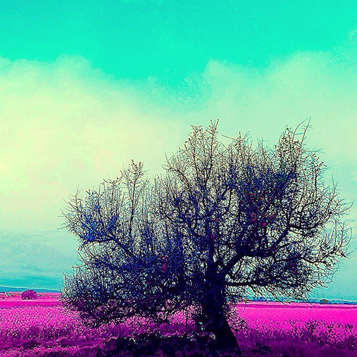 Welcome To My Wonderland #mjdoddy Welcome Sun #photoexpress #wonderland #whatawonderfulworld #whenthesunsgoesup #sunset #sunshine #seethebeauty #relax #thessaloniki #iphoneonly #instagreece #imagine #orange #aviary #deluxefx #feelings #feelthevibe #Greece #keepthespiritalive #colors #chill #nature #magic #welcomemay #may #Hellas