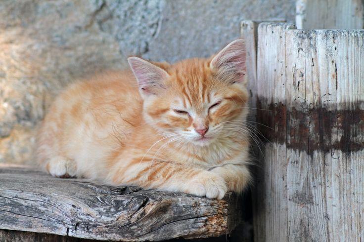 Art print - Il riposo del guerriero - Gattino che riposa #cat #gatto