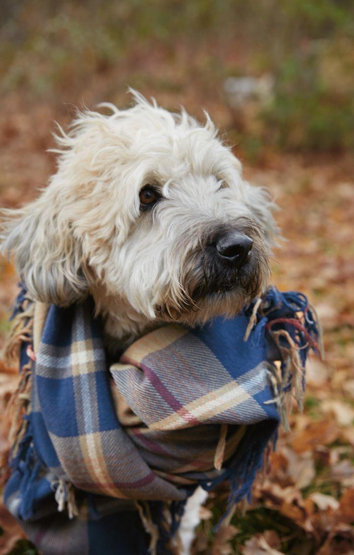 Cuteness overload.  Fall dog on the East Coast.  http://www.lexingtoncompany.com/