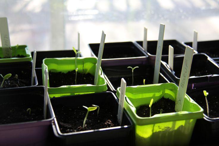 J'ai récemment donnée un atelier à plusieurs de mes collègues de travail sur le thème des »semis et potager urbain». Afin de faire profiter un plus large auditoire des conse…