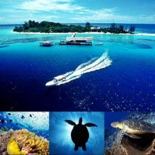 Pulau Selingan, Sabah Borneo (Maleisie)