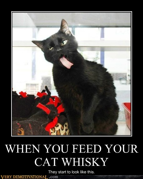 WHEN YOU FEED YOUR CAT WHISKY