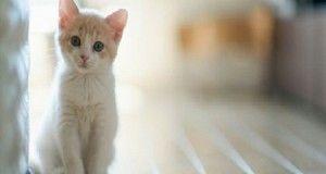 Parásito intestinal de gatos podría curar el cáncer