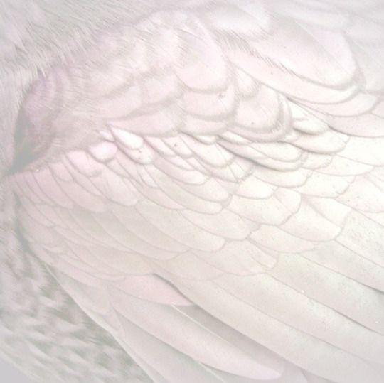 Angel wins - Alas de Angel Pinterest: @erikaevans5245