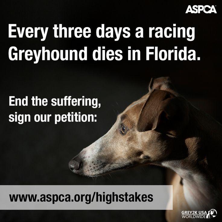 Cruelty against animals essay