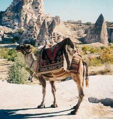 Nagy török körutazás üdüléssel.  http://fizetovendeg.travelgate.hu/torokorszag/torok-riviera/isztambul/nagy-torok-korutazas-udulessel/244736586