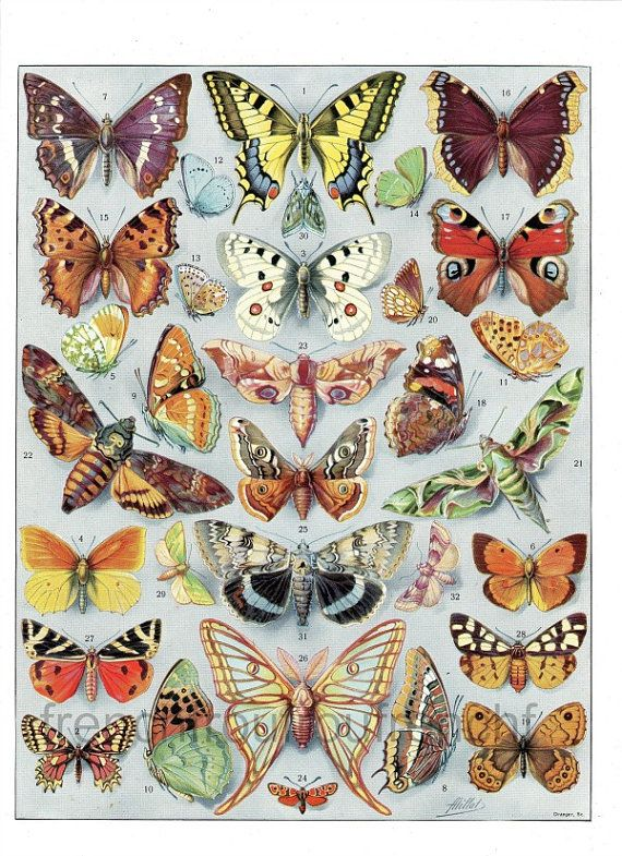 DIGITAL DOWNLOAD antique french illustration exotic butterflies 9 inches by 11…