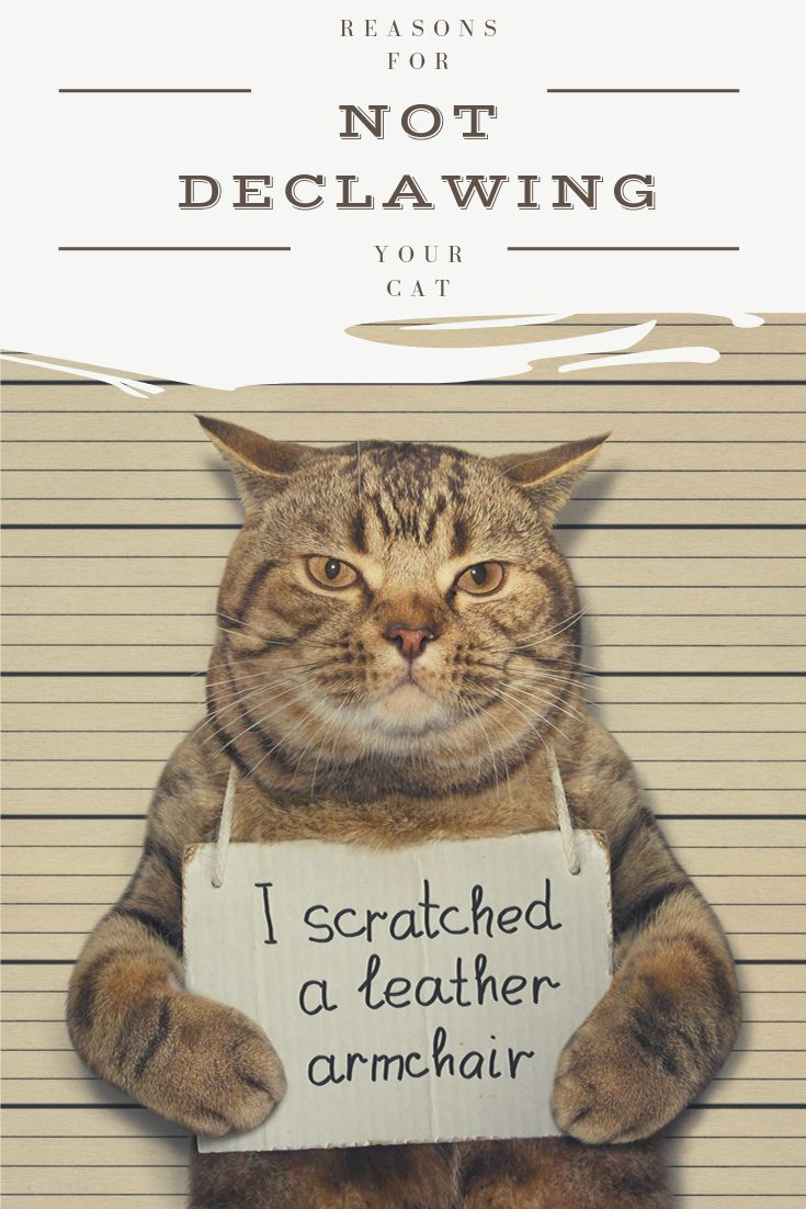 Declawing a cat dont do it cats cat s animals