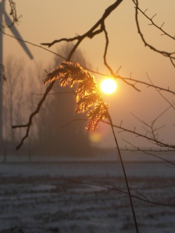 Een winterse verjaardag gehad op 25 januari, eerst in de vroege ochtend een winterwandeling gemaakt..