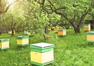 Bee-keeping: the impact of cold weather on bees, and how bee-keepers and gardeners can help. #bees #beekeeping #organic