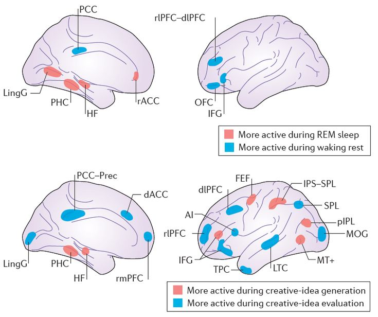 brain areas - REM sleep vs. creative