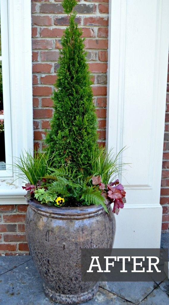 Fall container garden with Emerald Arborvitae, heuchera, autumn fern, acorus and pansies
