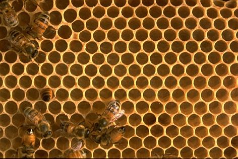 Fractal science and sacred geometry in bee hives.