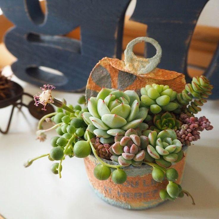 「 寄せ植え。  昨日は息子と一緒に公園へ。 背中痛い。 腰痛い。 腕痛い。 ちょっと本気出したらこうだよ。 動けな〜い。 情けな〜い。 チョコほし〜い。  #多肉#多肉植物#サボテン#succulents#succulent#cactus… 」