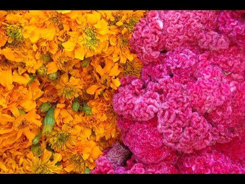 """Los dos tipos de flores más usadas en las ofrendas de Día de Muertos: cempasúchitl y """"terciopelo"""""""