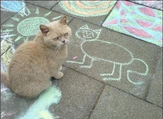 Dude, that's not even close!Awkward Moments, Kitty Cat, Chalk Drawing, Funny Pictures, Self Portraits, Funny Cat, Sidewalk Chalk, Funny Animal, Grumpy Cat