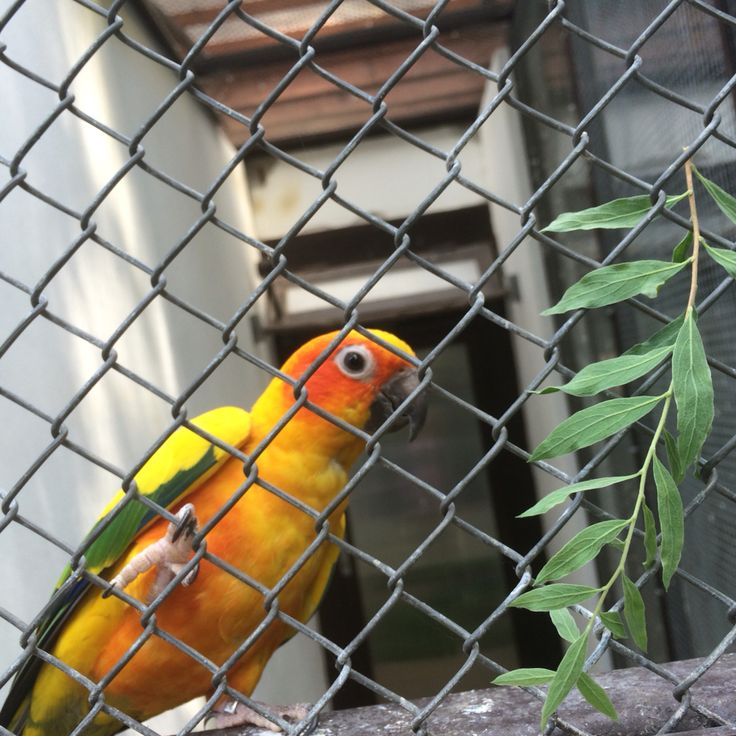 V létě krmíme Papagáje 💛💚 #parrot