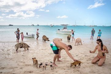 Totally on my bucket list now! This island in Bahamas has super adorable pigs just hanging out and swimming alongside human tourists.