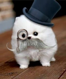 i need that dog. without the mustache and tophat