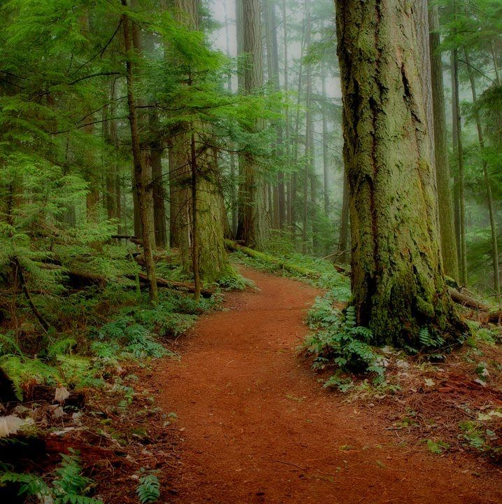 Heritage Forest in Qualicum Beach on Vancouver Island - a hidden gem...