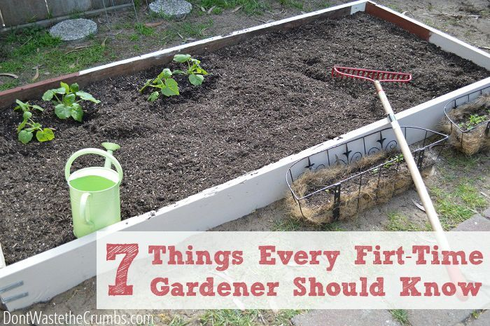 Are you starting a garden or looking to start a garden? Read over these 7 things that every first time gardener should know. From soil to seedlings, these tips are sure to take the guess work out of starting your first garden.  (scheduled via http://www.tailwindapp.com?utm_source=pinterest&utm_medium=twpin&utm_content=post346329&utm_campaign=scheduler_attribution)