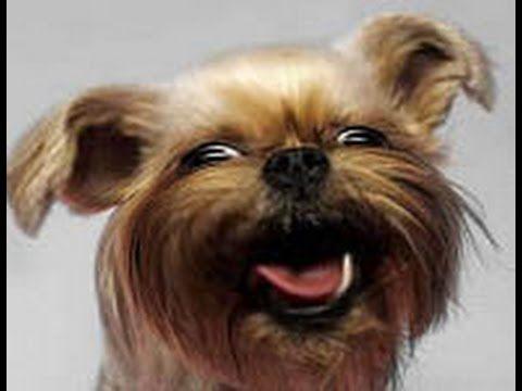 Смешные собаки ● Приколы с животными лето 2014 ● Funny dogs vine compilation