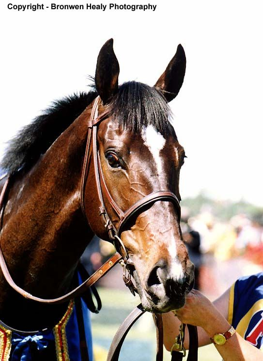 Jezabeel (NZ) 1992 (Zabeel-Passefleur), winner of the 1998 Melbourne Cup.