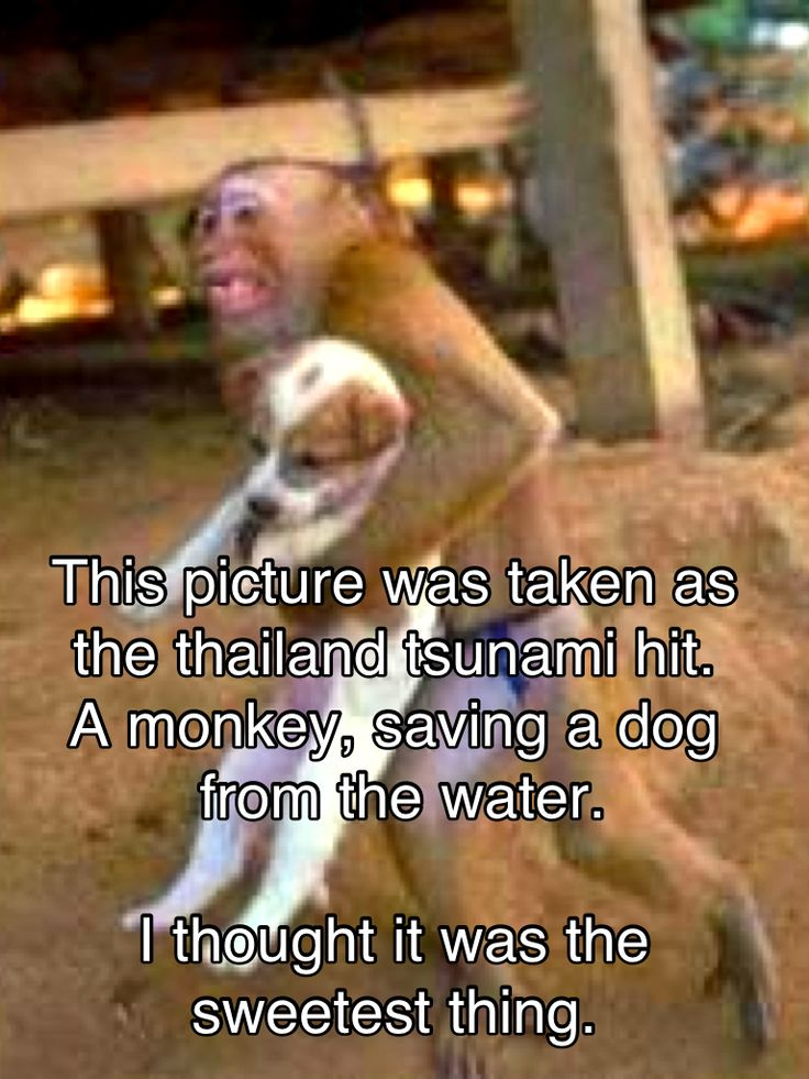 Speaks for itself, animals are brilliantHeroes, Heart, Dogs, Sweets, Monkeys, True Love, Baby Animal, People, Tsunami
