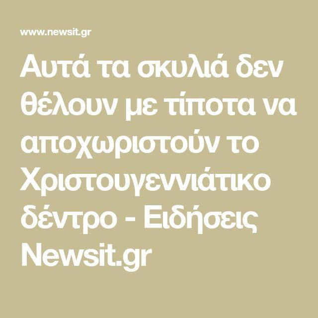 Αυτά τα σκυλιά δεν θέλουν με τίποτα να αποχωριστούν το Χριστουγεννιάτικο δέντρο - Ειδήσεις Newsit.gr