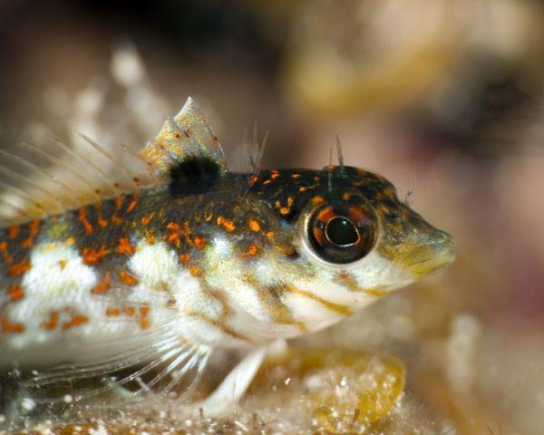 Pin by Grand Cayman Passenger Picks (Val Kegel) on Fish Fun