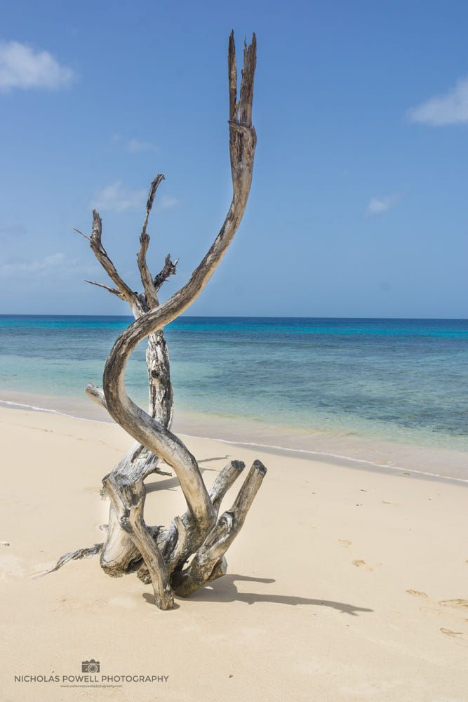 Driftwood on beach (Barbados) by Nick Powell on 500px