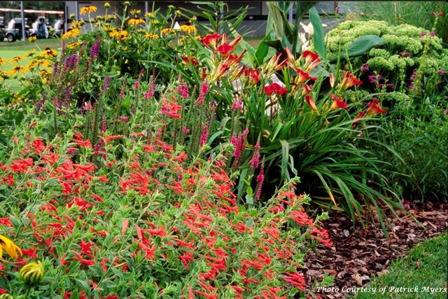 11 best planting information images on pinterest for Garden plant information