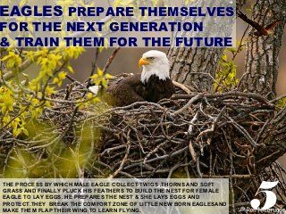 Leadership lesson from eagles