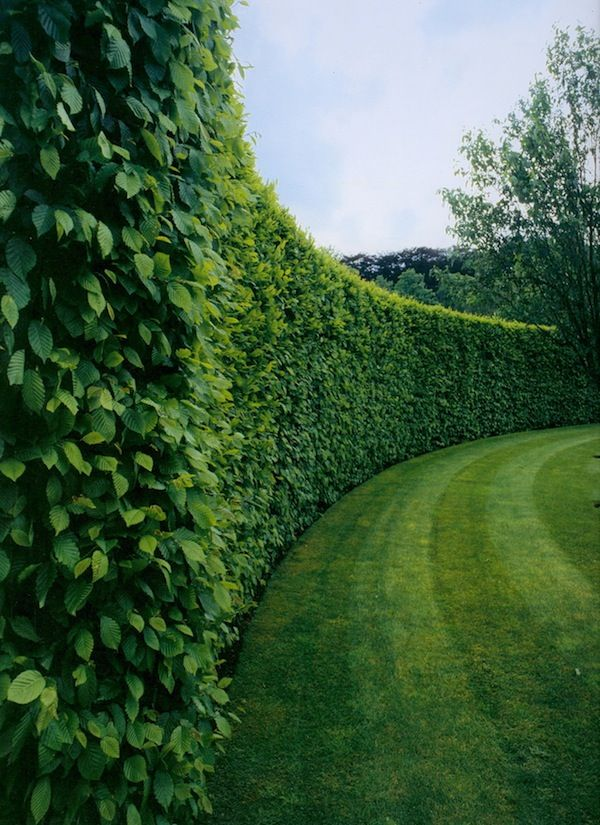 25 best ideas about hedges on pinterest hedges for Garden design ideas with hedges