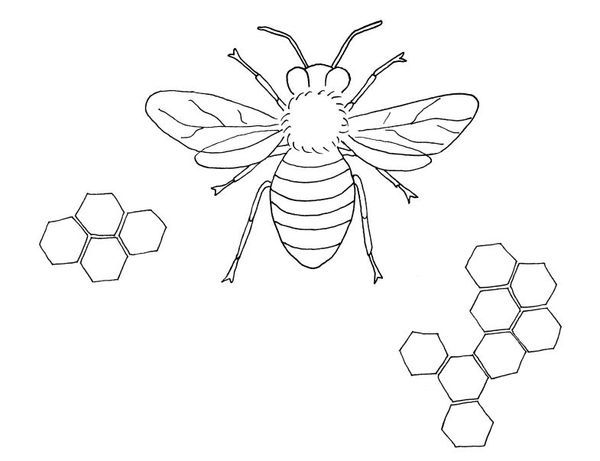 Bee Embroidery Pattern- - inspiration - medical diagrams of bugs, embroidered