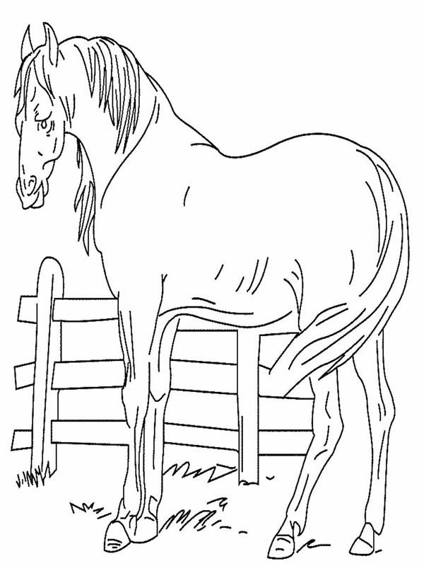 Horse An Old Horse In Horses Coloring Page Coloring Books