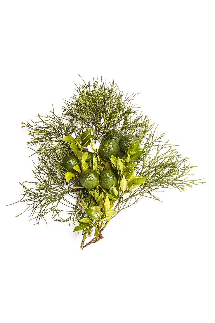 Blue Cypress & Petitgrain. Bondi Wash scent #5