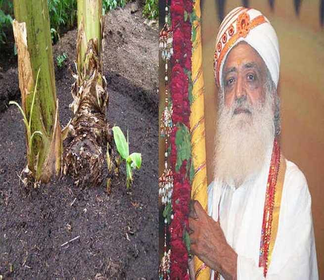 REVEALED: Asaram Bapu made devotees and ashram workers consume banana root to make them impotent, kept sexual boosters only for himself Looking for online english news paper then you are at the right place. Daily bhaskar provides you all english news like daily news, astrology and spritual news, cricket updates and live scores, sports news headlines and much more only on http://daily.bhaskar.com/national/