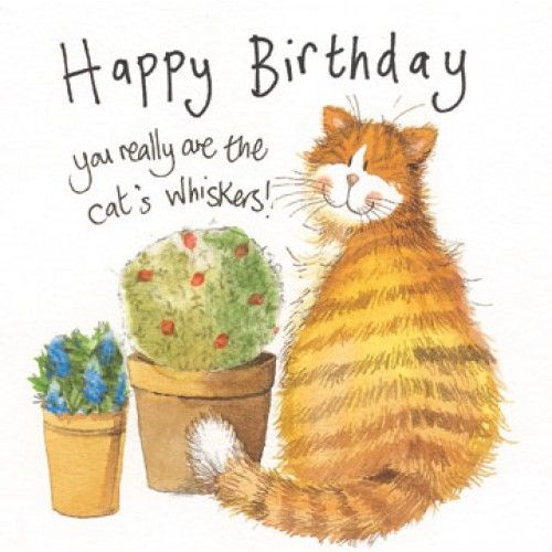 Happy Birthday Cat We Heart It: 207 Best Images About HaPpY BIrThDaY On Pinterest