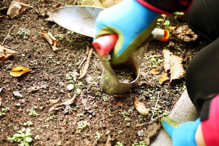 tuulinenpaiva-fi-syyspuuhat-kukkasipulien-istutusta