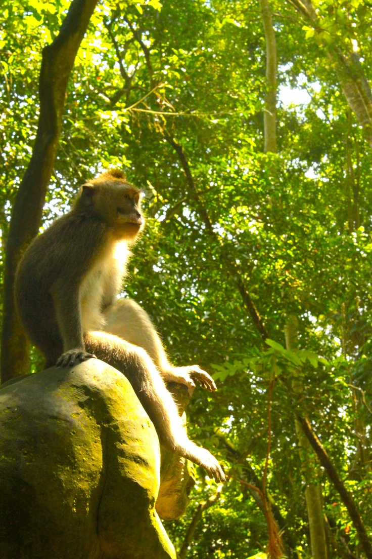The monkey in deep thoughts/ reminisicing