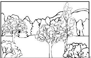 Landschaft Wald Einzelne Baeume Ausmalbild & Malvorlage