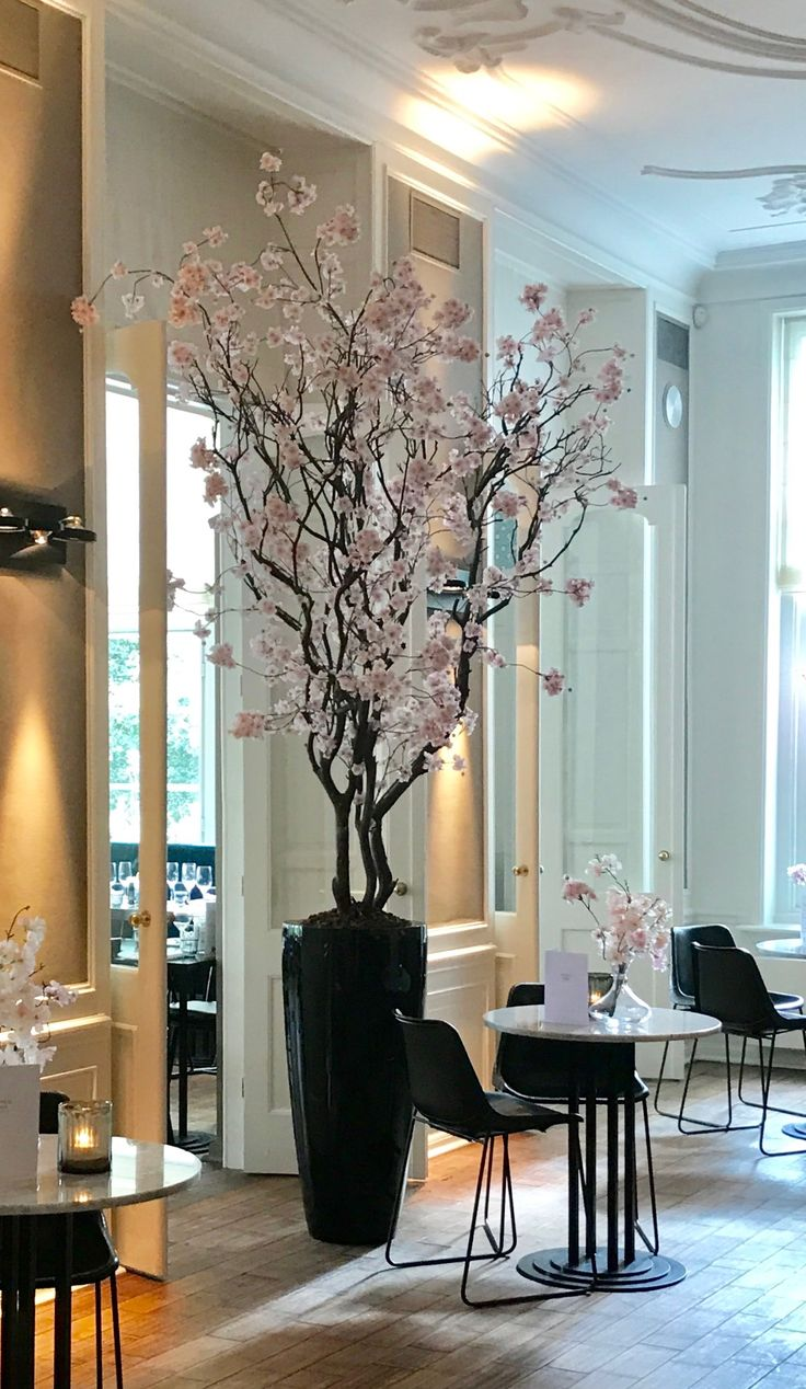 Blossomtree pink, Height 3 mtr at Hotel Central Park te Voorburg...