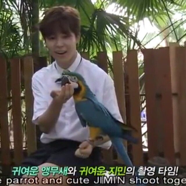 Cute parrot with cute jimin  ㅡ BTS Summer package 2015 (I don't have the link the video got deleted I downloaded it sry) #jimin#bts#bangtan#parkjimin