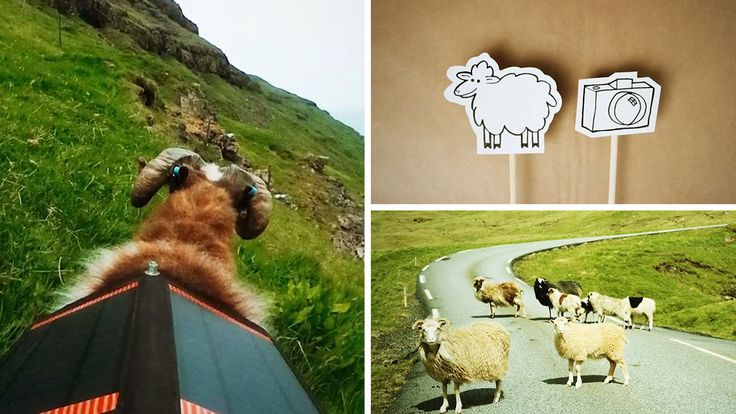 Faroe Islanders fed up with waiting for Google Street View to arrive attach cameras to sheep to create their own version