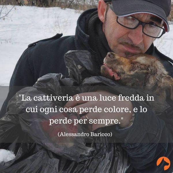 Hanno dato fuoco al rifugio di Andrea Cisternino in Ucraina. I cani morti bruciati.   Pet Levrieri Onlus - Salva e adotta un levriero