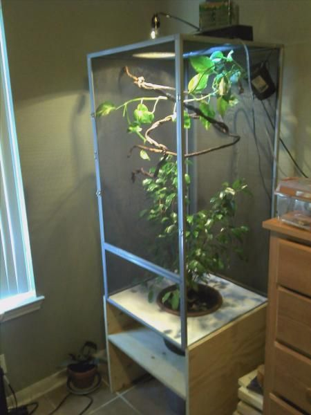 45 Best Chameleon Habitat Amp Cage Examples Images On