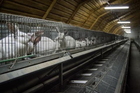 Video kanitiloilta yhdistää muotinimiä eläinrääkkäykseen | Oikeutta eläimille